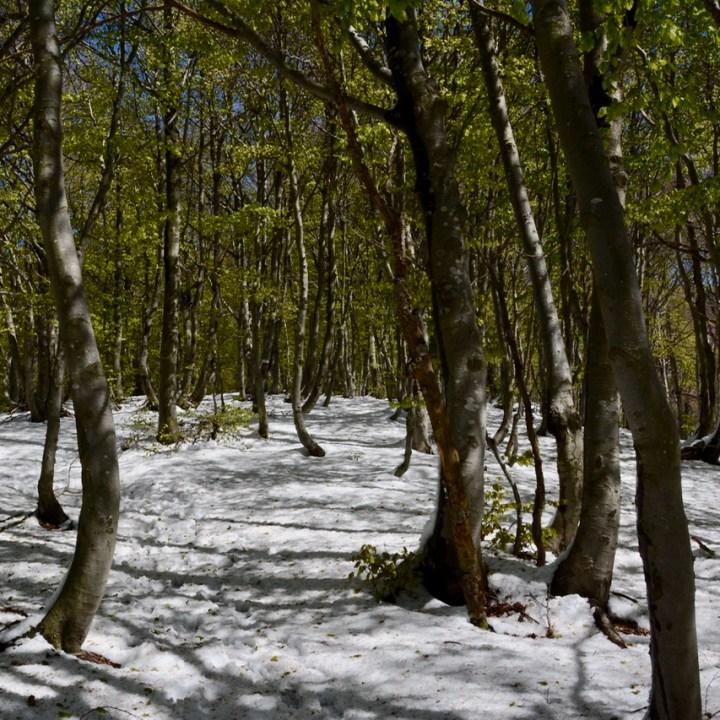 travel with kids children mount spalavera lago maggiore hiking path