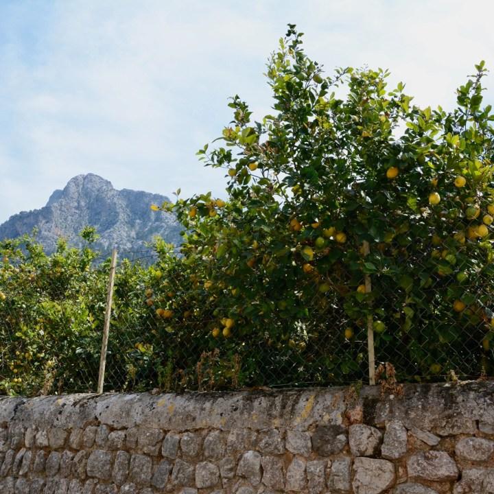 travel with kids children soller mallorca spain hiking fornalutx lemon grove
