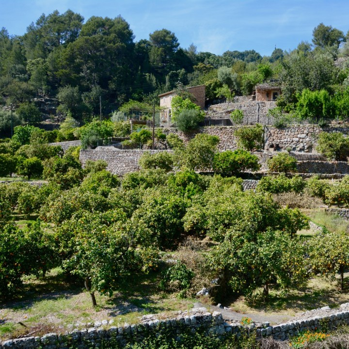 travel with kids children soller mallorca spain hiking fornalutx orange grove