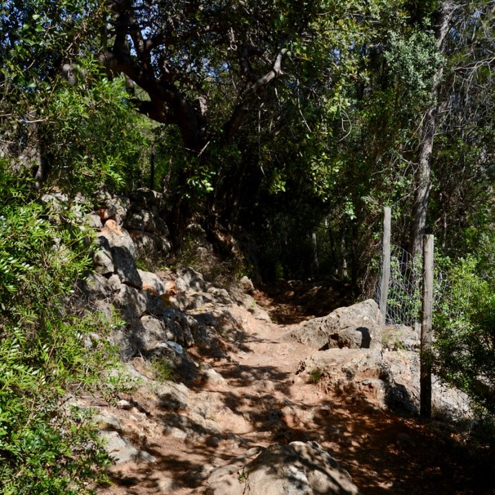 travel with kids children soller mallorca spain hiking fornalutx hiking path