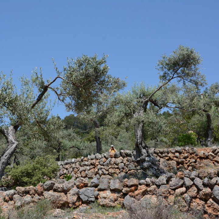 travel with kids children roller Mallorca Spain hiking dry stone walls
