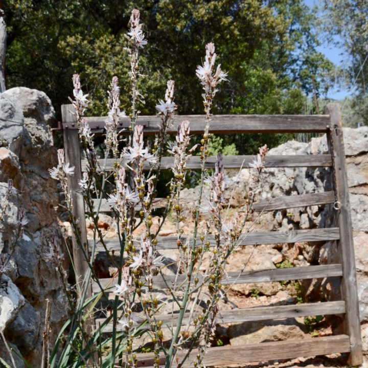 travel with kids children soller mallorca spain mirador ses barques wooden gate