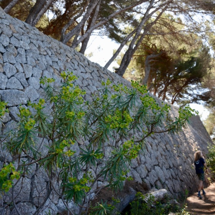 travel with kids children soller mallorca spain coastal hike ben's d'avall to cala deia stone wall
