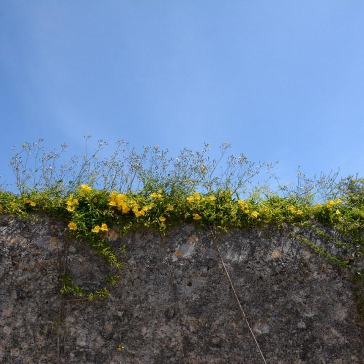 travel with kids children mallorca spain raixa estate stone wall