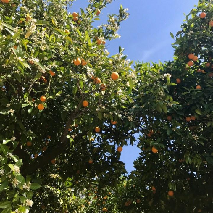 travel with kids children soller mallory spain orange blossom