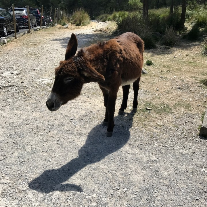 travel with kids children soller mallorca spain three mountain tops hike lofre donkey