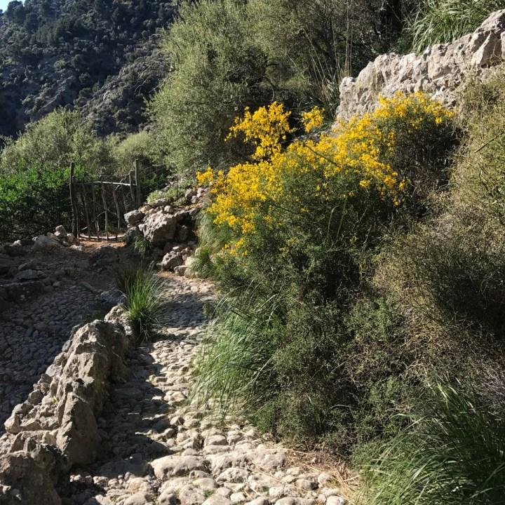 travel with kids children soller mallorca spain three mountain tops hike lofre barring de biniaraix