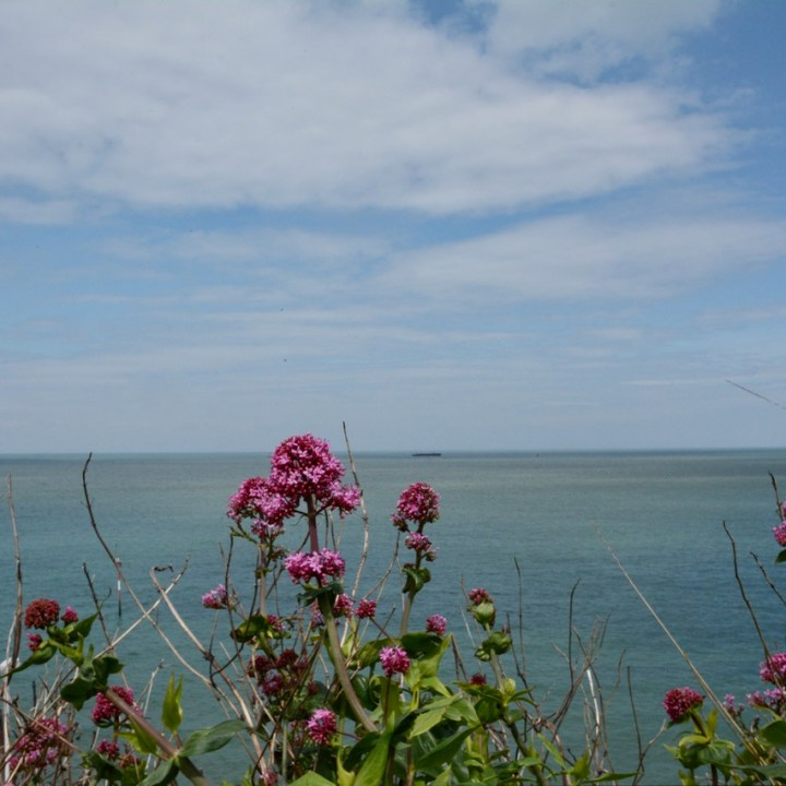 seaside flowers