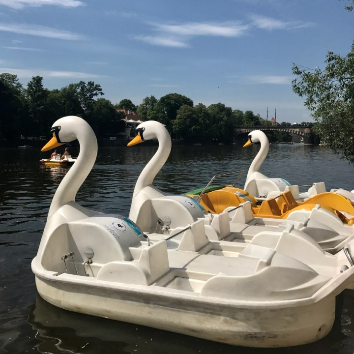 prague with kids guide swan pedal boats