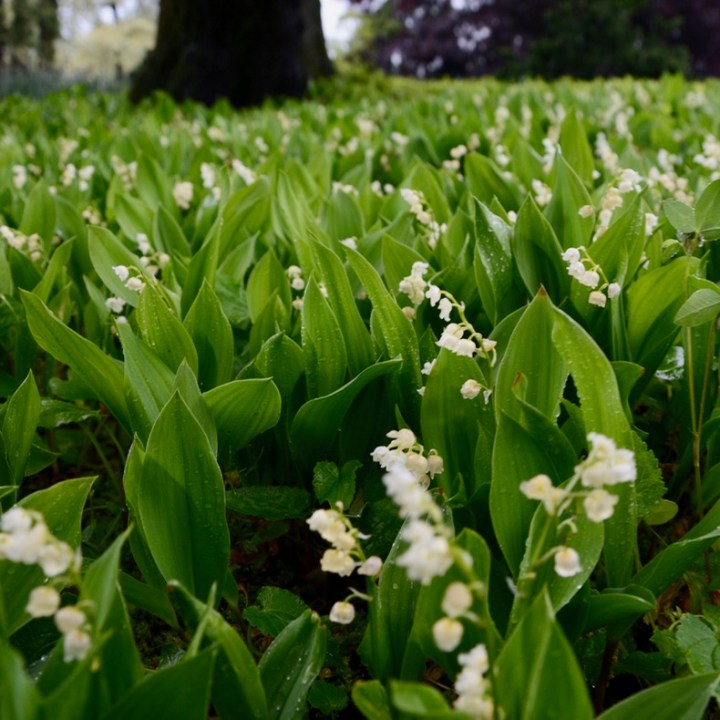 travel with kids children villa taranto botanical garden pallanza lago maggiore lily of the valley