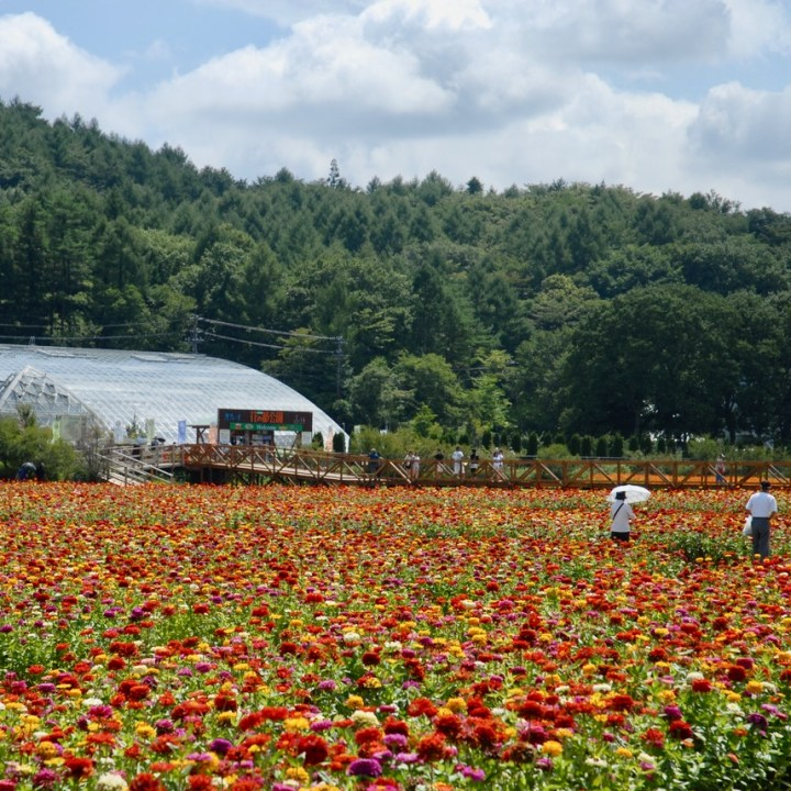 cycling with kids lake yamanakako flower farm