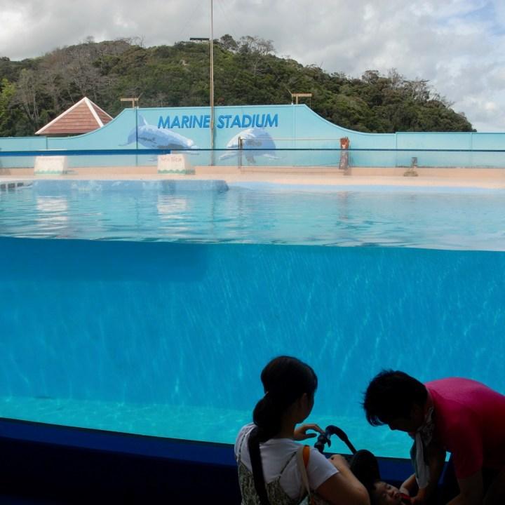 japan with kids driving holiday izu peninsular shimoda aquarium