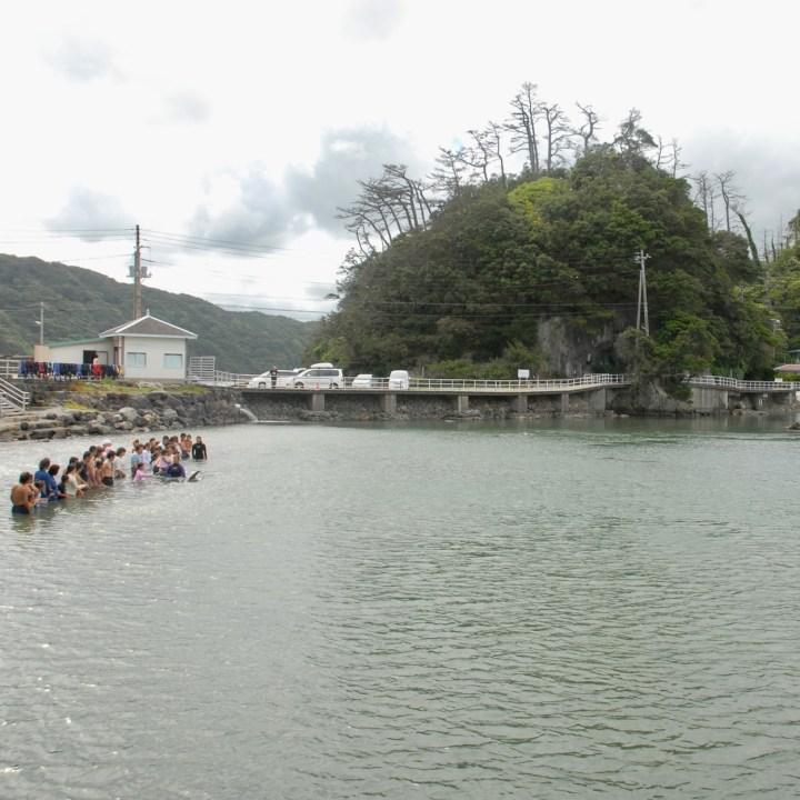 japan with kids shimoda aquarium swim with dolphin
