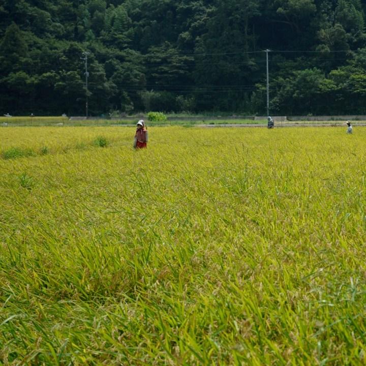 heda japan with kids izu peninsular scarecrow