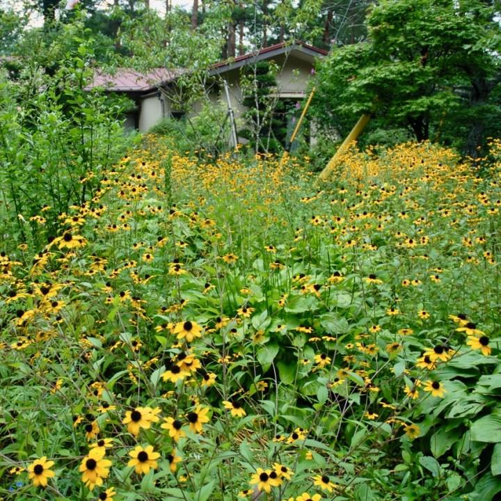 travel with kids japan fujiyoshida hiking sunflowers