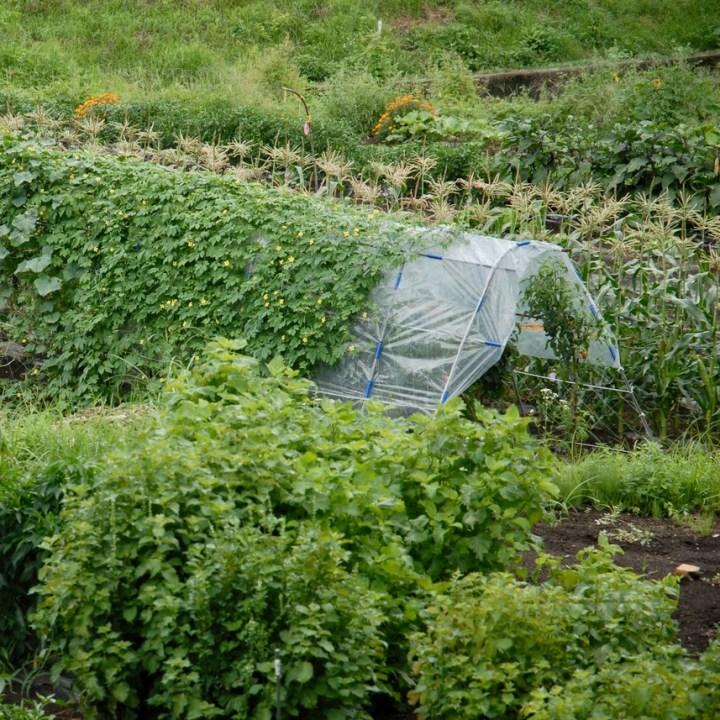 travel with kids japan fujiyoshida hiking vegetable garden
