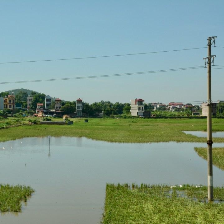 vietnam with kids ha long bay rice field