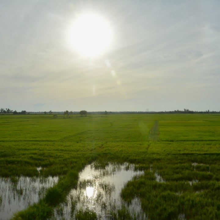 vietnam with kids hanoi train rice field