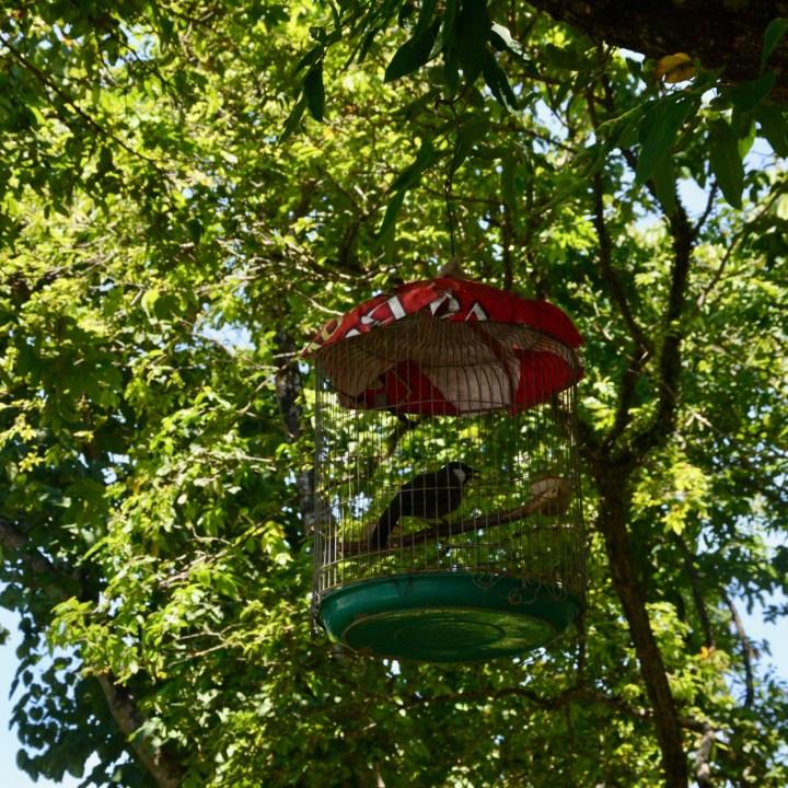vietnam with kids hue bird cage