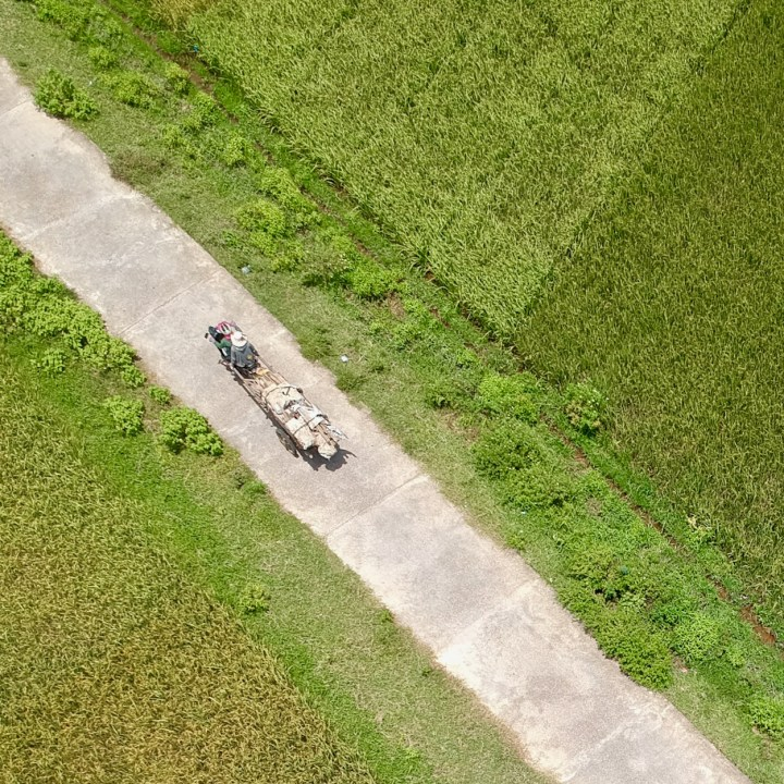 vietnam travel with kids hoi an rural bike ride horse cart