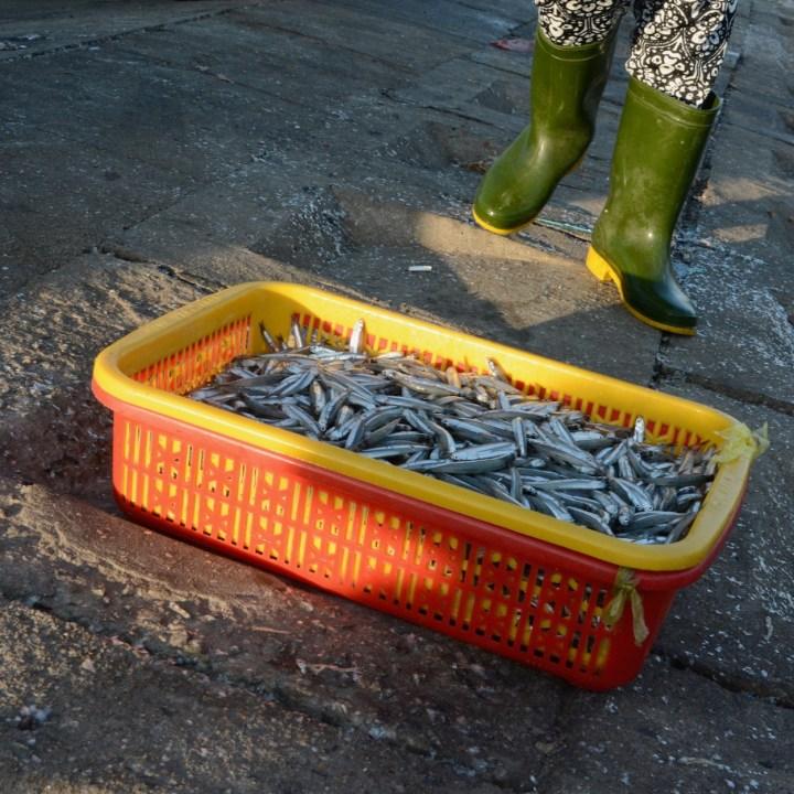 photo tour vietnam hoi an sardines