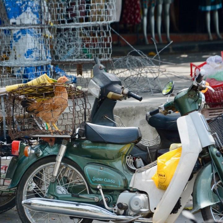 vietnam with kids hoi an cooking class chicken
