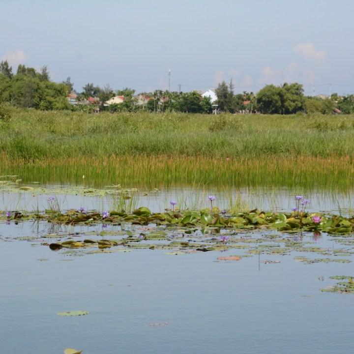 vietnam with kids hoi an allamanda estate lily pond