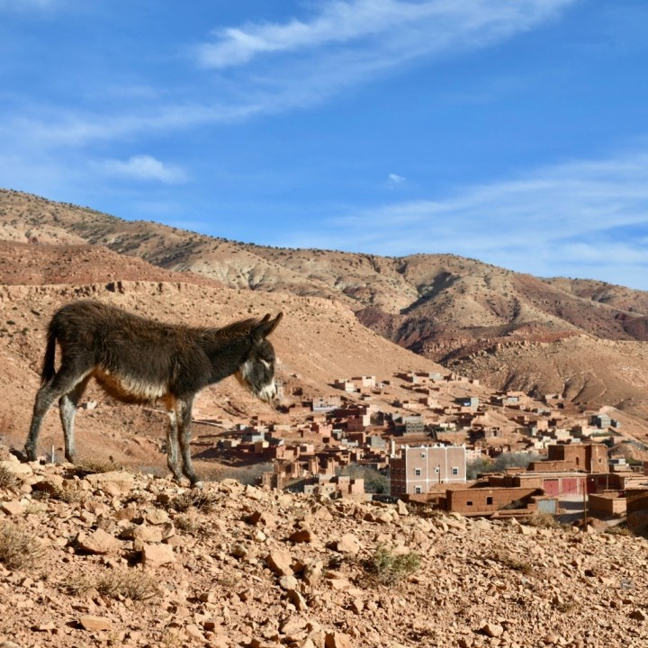 Morocco with kids atlas mountains donkey