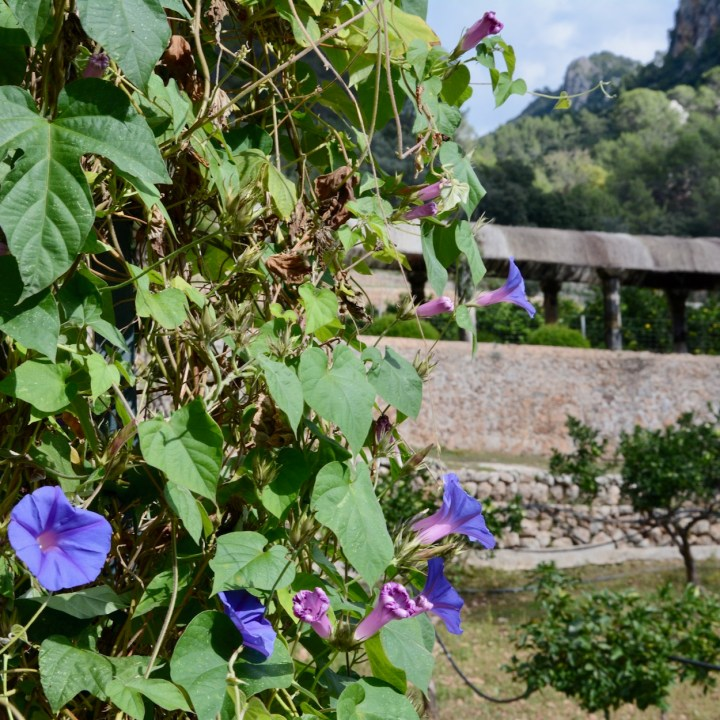 Mallorca with kids gardens alfabia morning glory