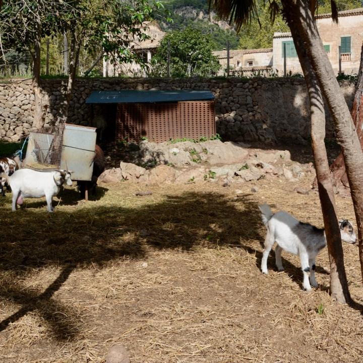 Mallorca with kids gardens alfabia goats