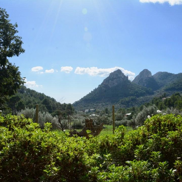 Mallorca with kids gardens alfabia mountain view
