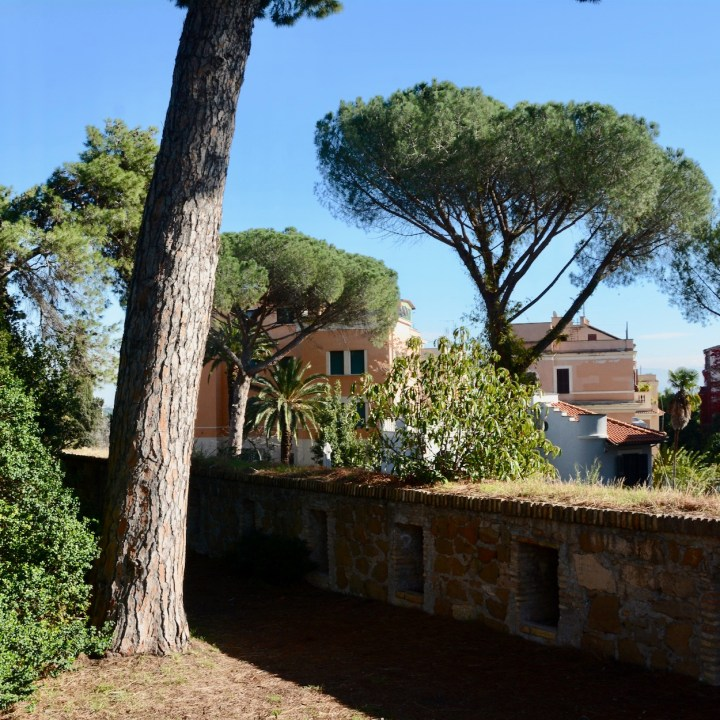 Rome with kids pine trees