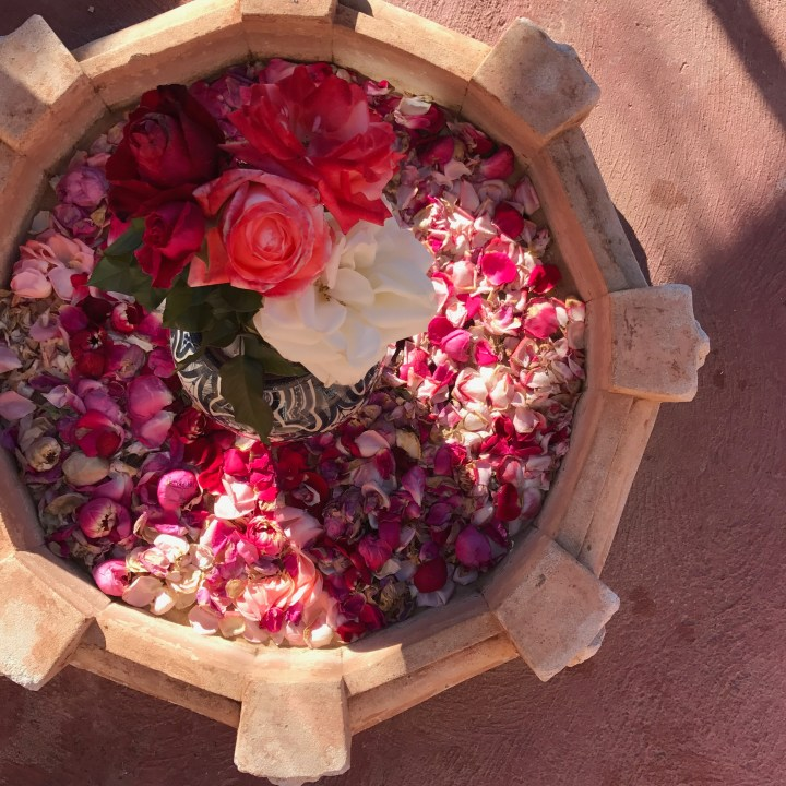 Morocco with kids marrakesh roses
