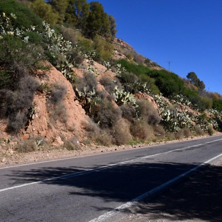 Morocco with kids roadside vegetation