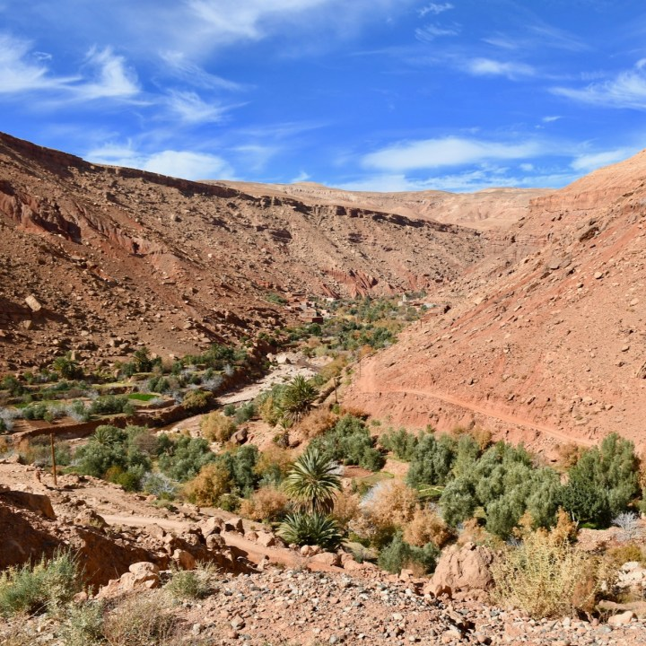 morocco with kids ounilla valley oasis view