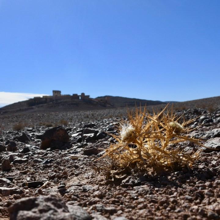 Ouarzazate Morocco with kids abandoned filmset thistle
