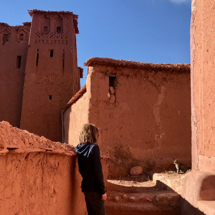 morocco with kids travel tips cats