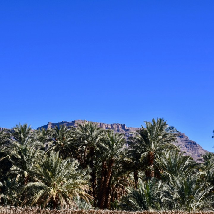 Morocco with kids drive M'Hamaid palm grove