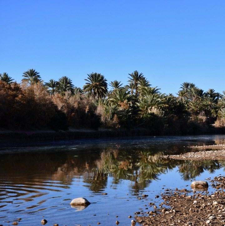 Agdz Morocco with kids Lodge Hara Oasis palms