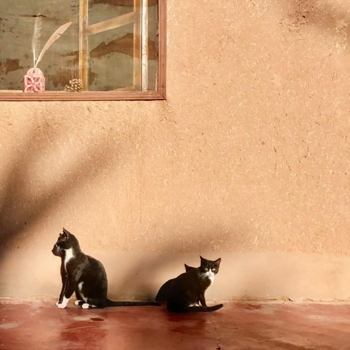 Agdz Morocco with kids Lodge Hara Oasis cats