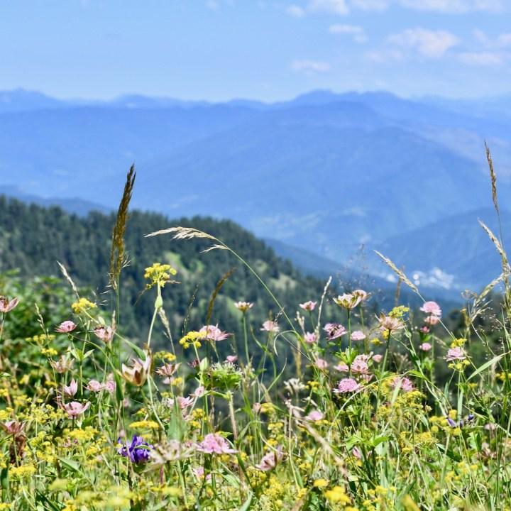 Exploring Georgia with kids flower meadow