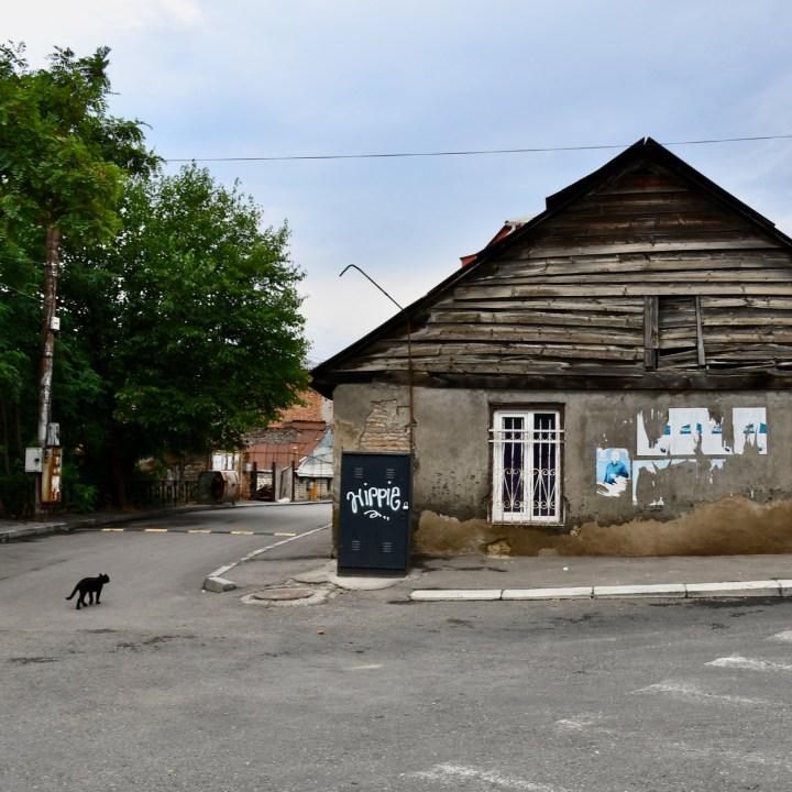Tbilisi with children catstagram