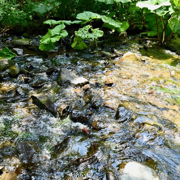 Askuri Georgia snowshoe hiking trail clear water