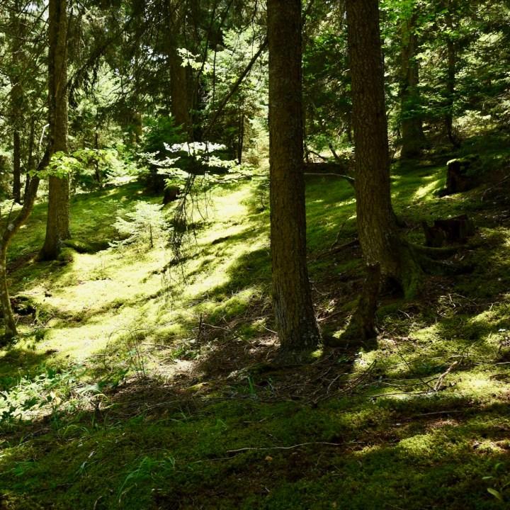 Askuri Georgia snowshoe hiking trail moss