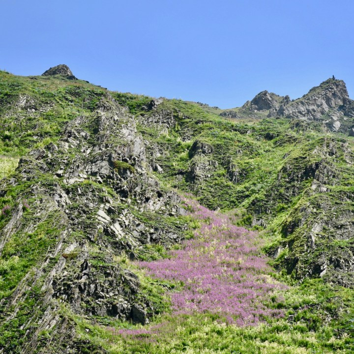 Juta hike flower carpet