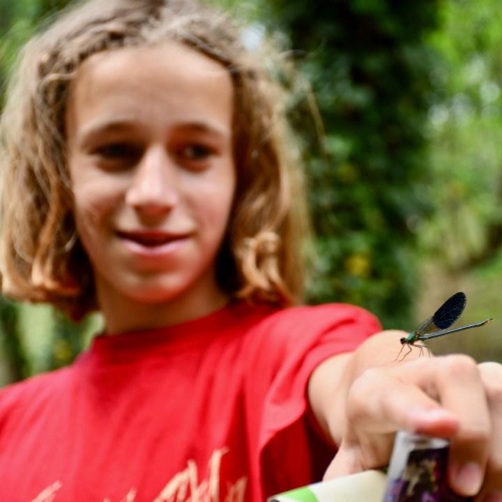 Tbilisi botanical garden dragon fly