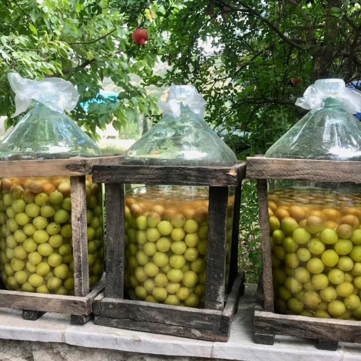 winery Georgia Tbilisi plums