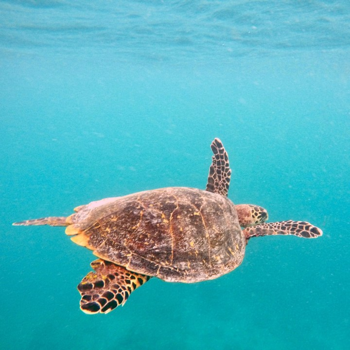 Akumal, Mexico | Swimming and Snorkelling with Turtles in Akumal