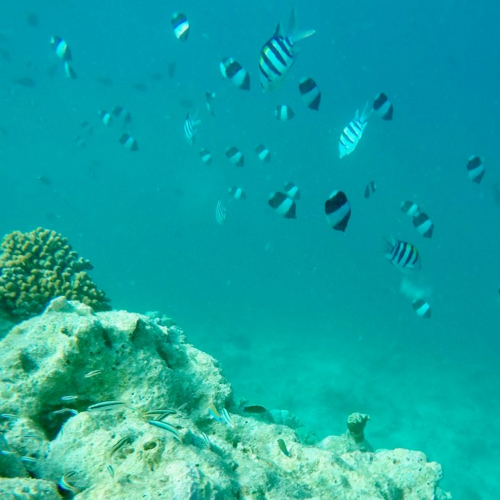 Lux South Ari house reef