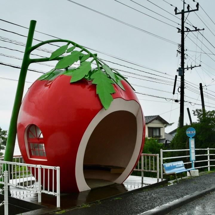 tomato bus stop route 207